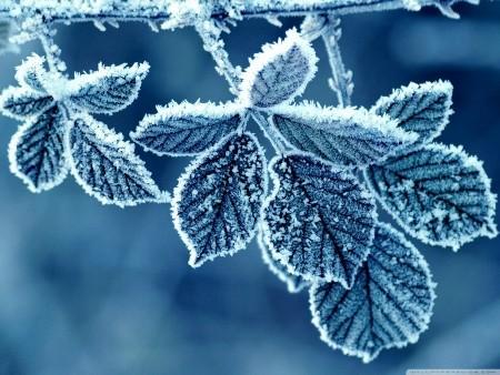 ما هي المربعانية , معلومات عن سبب تسمية المربعانية , مميزات موسم المربعانية