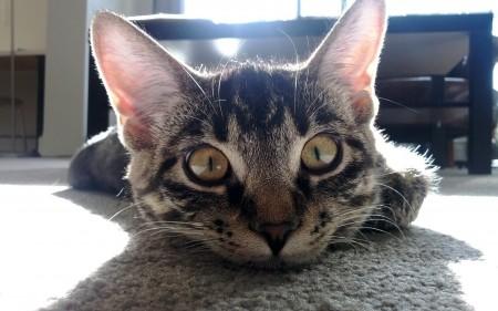 صور قطط كيوت , صور قطط جميلة , 2018 Cats wallpapers