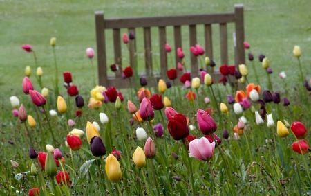 كلمات جميلة عن رحيل الربيع , كلام عن وداع فصل الربيع