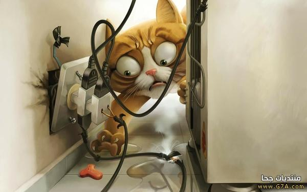 صور قطط مضحكة 2019 أحلى صور كاريكاتير مضحكة على القطط Funny Cats 2019