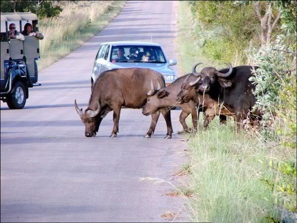شوارع افريقيا الخطيره