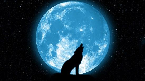 خلفيه قمر وذئب يعوى , اجمل صور الذئاب والقمر