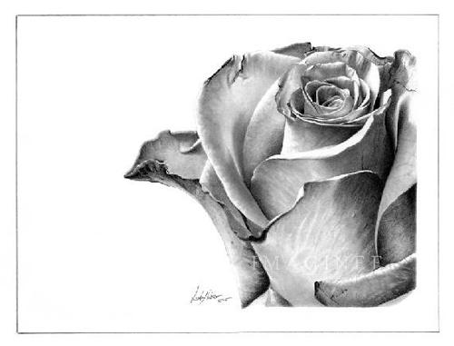صور رسومات بالرصاص رومانسية زهور وأشجار مرسومة , رمزيات مرسومه جاهزة للتلوين