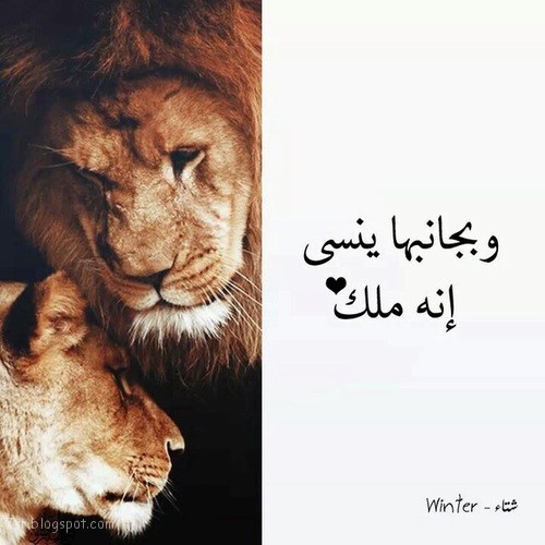 صور اسد مع العبارات , صور الاسد ملك الغابة Photos Lion
