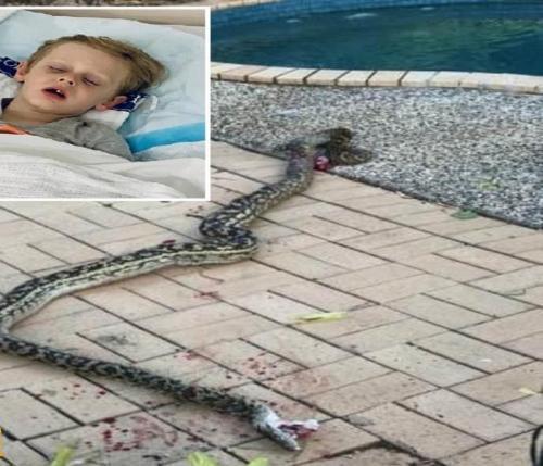 بالصور ثعبان ضخم يسحب طفل خارج منزله شاهد شجاعة الأب