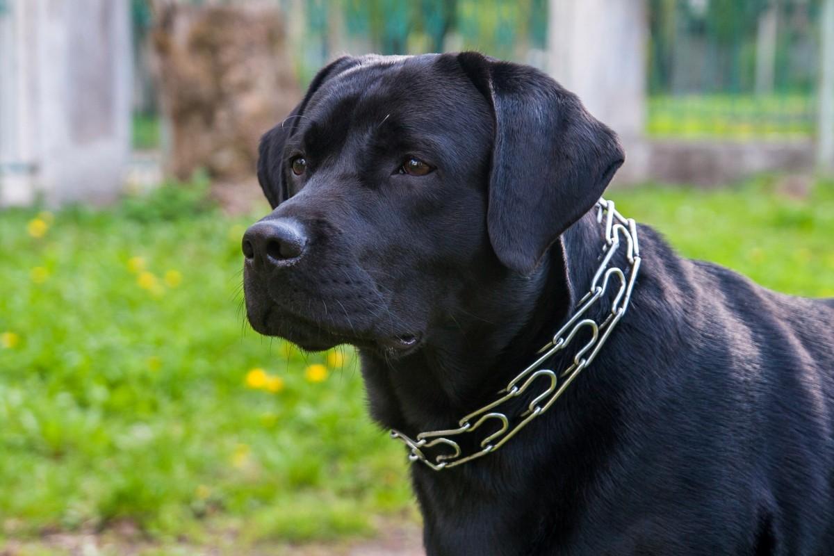 تفسير حلم الكلاب السوداء للرجل والمرأة , الكلاب السوداء للرجل العازب في المنام