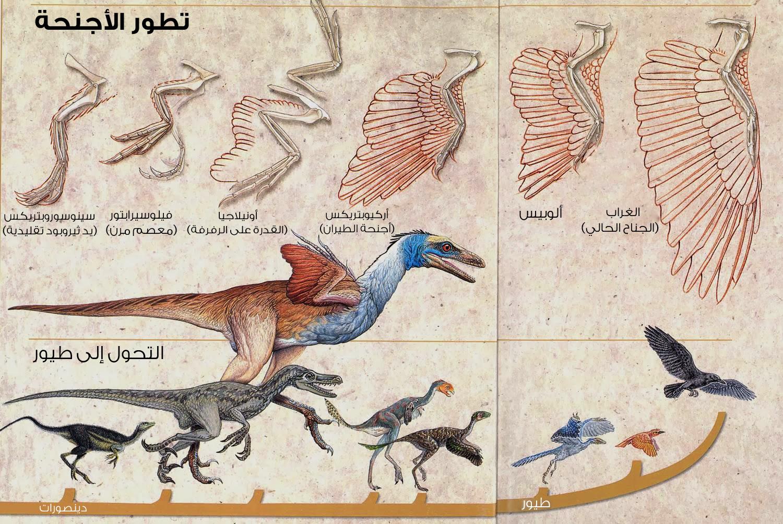 بحث عن الطيور واشهر أنواعها , مواصفات الطيور , انواع الطيور