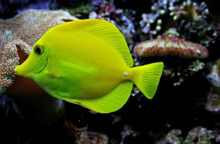 تفسير حلم السمك للمتزوجة والعزباء والرجل بتفسير ابن سيرين