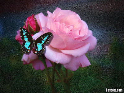 صور ورود بوكية من الورد احلى ورود رومانسية للمرتبطين
