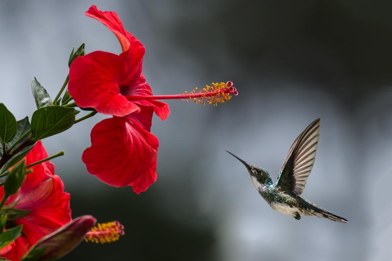 معنى الوردة الحمراء والزهري والصفراء والورد الأبيض فوائد و أهمية الورد