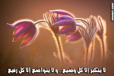 صور عن التكبر 2018 عليها كلام وعبارات غرور قوى 7014fadaeyat