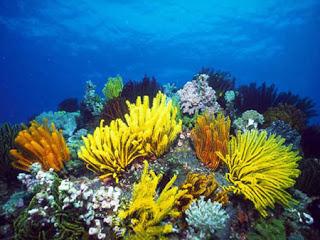 صور مكتوب عليها عبارات عن البحر , عبارات مكتوب على صور بحر