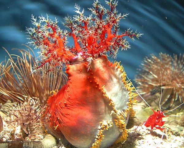 اجعل شاشه جهازك حوض سمك SeaApple Aquarium v2013.5.0 احدث اصدار