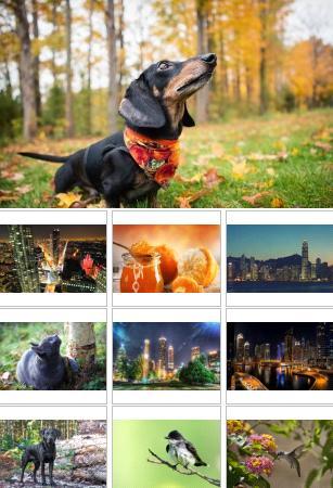 مجموعة خلفيات منوعة حيوانات وسيارات وطبيعه لاكثر من 140 خلفية جوده ممتازة HD Mix
