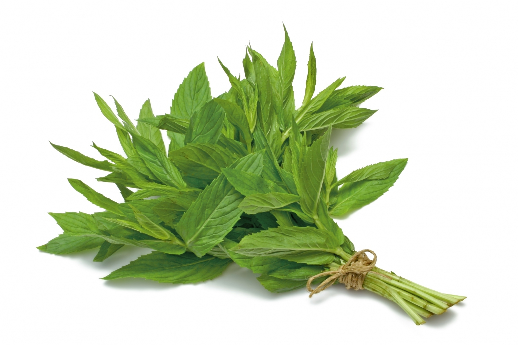 ����� ������� 2014 , ����� ������� ���� ������� 2014 , Benefits of Peppermint