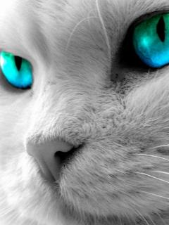 ��� ��� ���� , ��� ��� ����� , 2016 Cats wallpapers