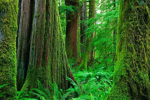 صور اجمل الاماكن التى يتم قضاء شهر العسل بها ,Vancouver Island