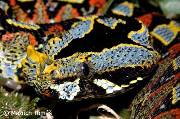 صور الأفاعي , أنواع الأفاعي , معلومات عن الثعابين والافاعي