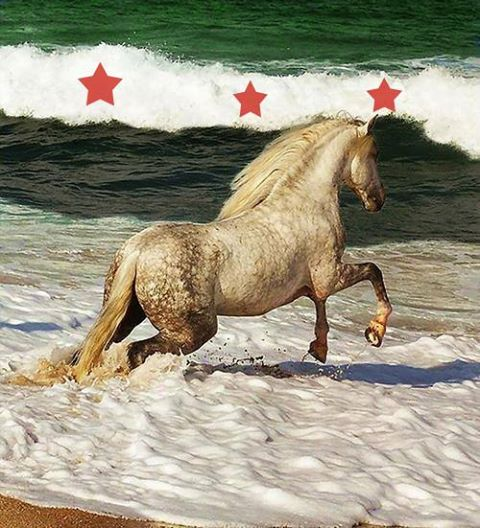 صور علم سوريا الحرة , صور علم الثورة السورية ,flag of Syria