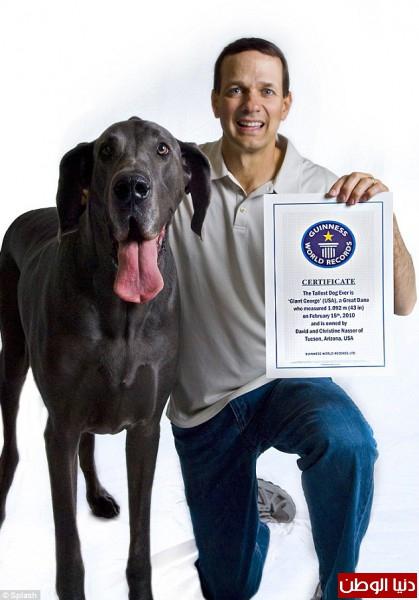 وفاة أطول كلب في العالم 2014 , شاهد بالصور وفاة الكلب جورج اطول كلب في العالم 2014