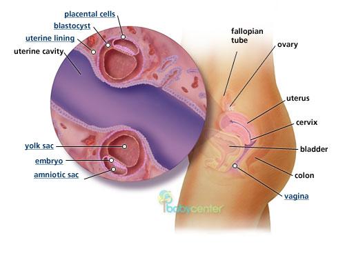 عوامل تساعد على الحمل بتوأم , كيف يمكنك الحمل بتوأم 2014