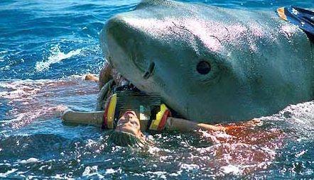 اسباب هجوم سمكة القرش , دم الحيض سبب من اسباب هجوم سمك القرش