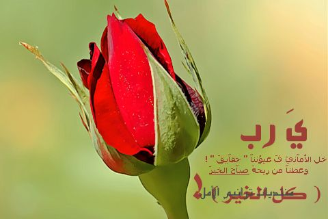 ��� ���� ����� 2015 , ������ ���� ����� ����� ��� 2016 ,Good afternoon