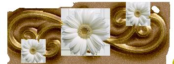 توقعات الابراج هالة عمر اليوم الاربعاء 27-11-2013 , برجك اليوم مع هالة عمر الاربعاء 27 نوفمبر 2013