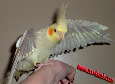 صور عصافير, معلومات عن العصافير