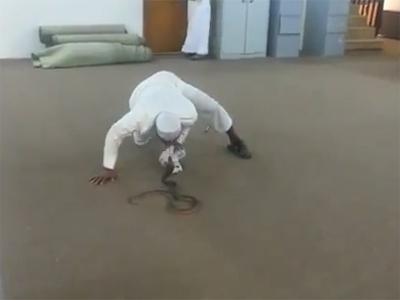شاهد بالفيديو شاب يتحدى ثعبان كوبرا بإحدى الدوائر الحكومية في جازانشاهد بالفيديو شاب يتحدى ثعبان كوب