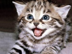 لماذا القط هو الحيوان الوحيد الذى يدفن برازة