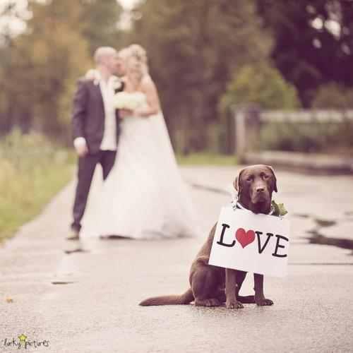 صور زفاف رومانسي , اجمل صور رومانسية زفاف للفيس بوك, love images for design