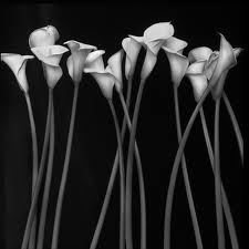 صور بلاك اند وايت 2014 , صور حب بالابيض والاسود 2014 , black and white photos
