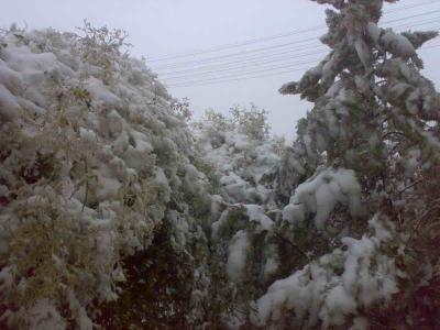 صور ثلوج الكرك والطفيله والشوبك ومعان والنقب الخميس 12-12-2013 , تساقط الثلوج في الاردن اليوم الخميس