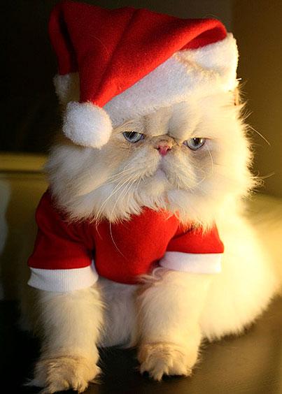 Photos animals dressed in Santa Claus HD