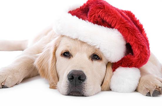 Photos animals dressed in Santa Claus 2014