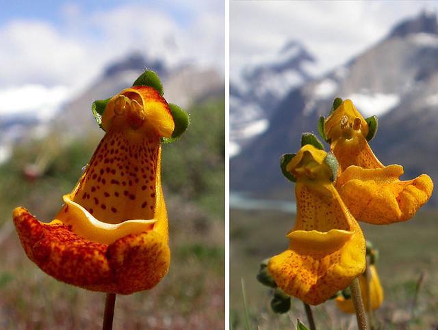 اجمل ازهار طبيعيه 2016 , صور ازهار مضحكه 2016 , صور ازهار باشكال مختلفه 2016