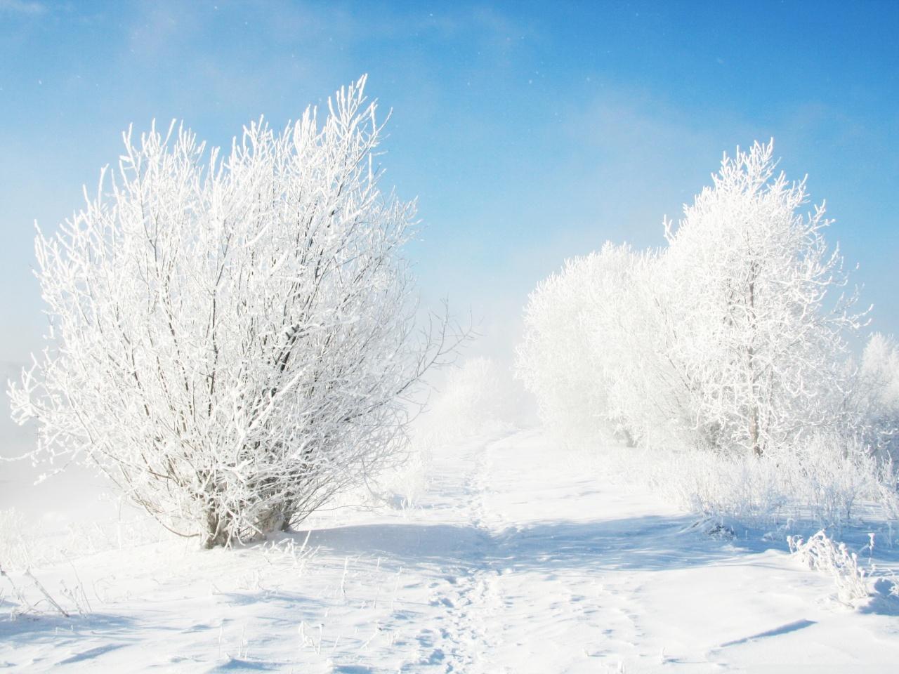 خلفيات فصل الشتاء والثلوج هذه السنة عالية الجودة فل اتش دي