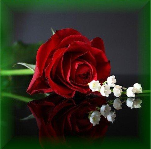 صور ازهار رومنسية , صور ازهار رومنسية لتقديم للحبيب او الحبيبة