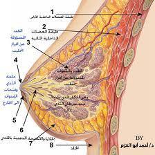 مرض سرطان الثدي , أعراض مرض سرطان الثدي , علاج مرض سرطان الثدي