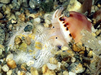 صور اسماك غريبه جديدة, اغرب سمك بالبحر