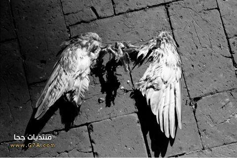 اروع رمزيات جالكسى انفجار جديدة 2014 , اجمل خلفيات جالكسى حلوى موت 2015