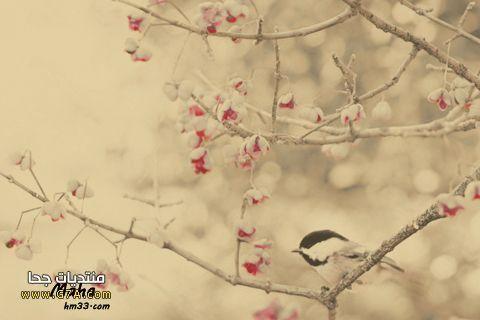 اجمل رمزيات جالكسى عصافير جديدة , احلى خلفيات جالكسى عطف خطيره