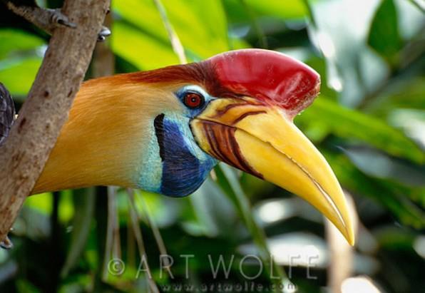 صور طائر البوقير , اجمل الطيور علي الارض طائر البوقير