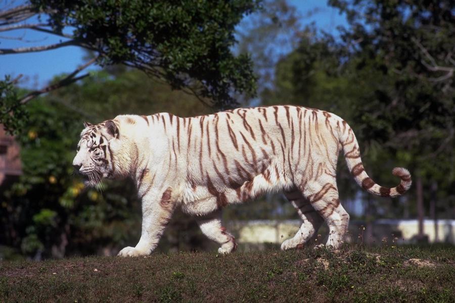 صور حيونات, صور حيوانات مفترسة, معلومات عن حيوانات مفترسة