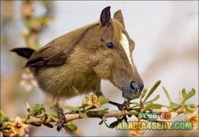 اجمل و احلى صور غريبة ، صور غرائب وعجائب عن الحيوانات