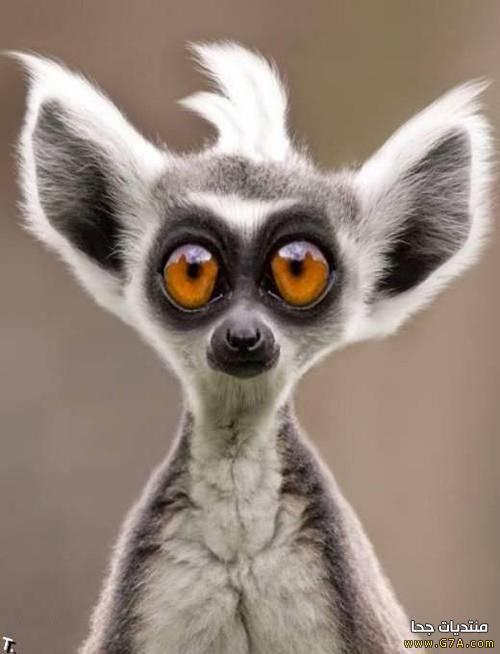 صور حيوانات مضحكة 2018 ، اجمل و احلى صور حيوانات مضحكة كاريكاتير Funny Animals 2018