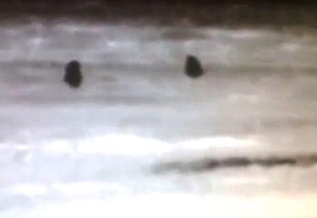 يوتيوب نساء سعوديات يجمعن نبات الفقع في وقت متاخر من الليل قرب من الحدود اليوم 16-2-2014