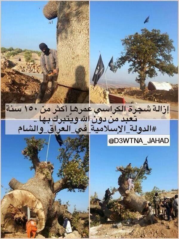 اخبار سوريا اليوم الاحد 16-2-2014 , داعش قطعت شجرة عمرها 150 سنة لان السوريون يعبدونها