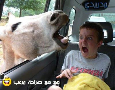 خلفيات صور تموت من الضحك 2016 منتديات فضائيات الأردن